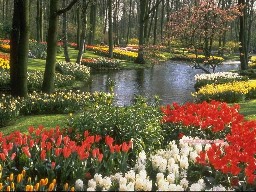 Çiçek resimleri masaüstü çiçek resmi masaüstü çiçekler